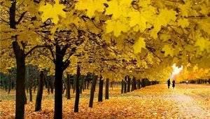 Осінній листопад