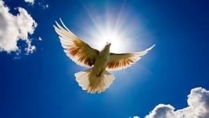 Вільним крила не потрібні