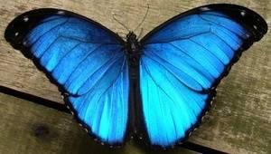 My butterfly 🦋