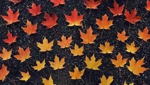 Ти схожа на осінь