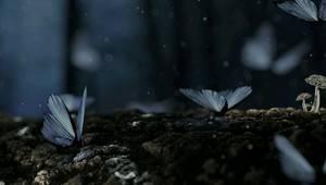 Чорний метелик