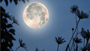 Сріблястий  місяць  в  небі  плив