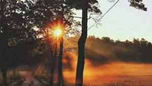 Про щоспівають ранком солов'ї